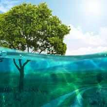 Half Underwater Photo