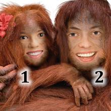 Ape Couple